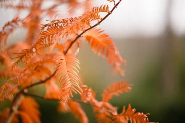 5 conseils pour s'occuper à l'automne