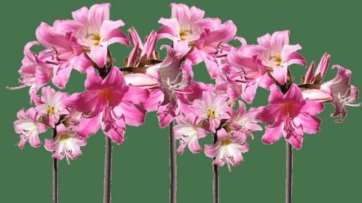 réaliser une composition florale pour la fête des mères