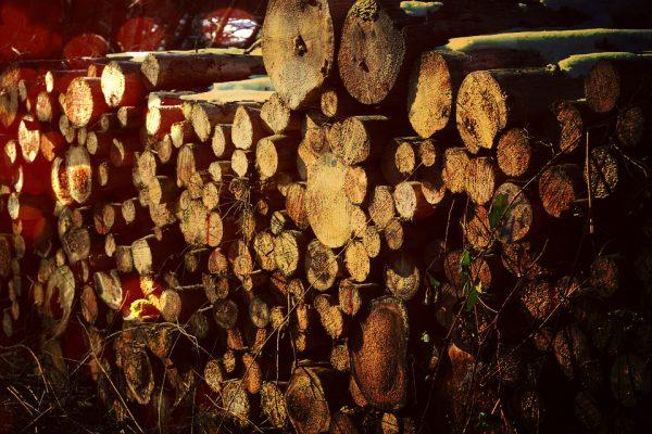 objets-insolites-en-bois