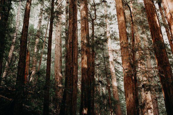 Forêt d'arbres