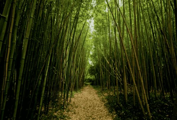Branches-bambou-naturel-dwyt-2